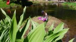 Fairy on lily pad